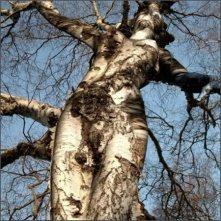 amazing_tree1