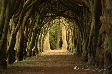 Tunnel-of-Trees-Cloister-Gormanston-College