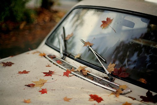 old-car-with-leaves